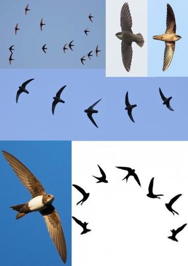 SWIFT 1